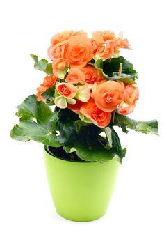 Il existe de nombreuses bonnes raisons d'avoir des plantes d'intérieur chez soi, et même d'avoir des plantes dans sa salle de bain. Calathea, Plante Zz, Decoration Plante, Agriculture, Vase, Green, Plants, Jungles, Home Decor