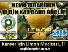Limon Kemoterapiden 10 bin kat daha güçlü!  Okumak İçin Tıklayın ► http://www.saglikhaberleri.com.tr/limon-kemoterapiden-10-bin-kat-daha-guclu-resimleri,561.html