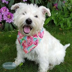 Pastel Watermelons Summer Dog Bandana: Sweet pink and red watermelon slices on a sky blue background are reminiscent of a watercolor painting. Pastel, Summer Dog, Dog Items, Pet Names, Christmas In July, Dog Bandana, Vintage Gifts, Dog Mom, Handmade Christmas