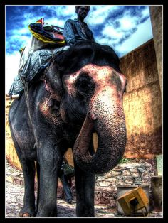 ride an elephant. I think this would be sooo cool. Maybe in Africa one day:)