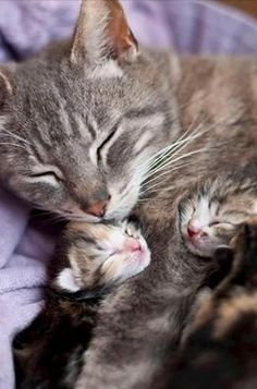 Looks like s young mom with her two babies. I know I made the right decision about neutering because I could never be able to get rid of kittens.