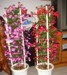 Spring picture of a fern: Christmas cacti can be arranged this way: