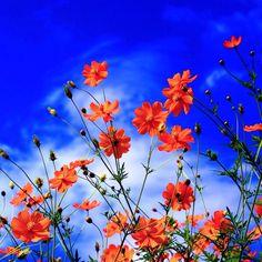 Link: http://m.kappboom.com/gallery/l?p=148709&d=4&share=pinterest.shareextension