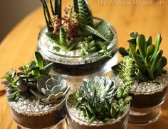 DIY Succulent gardens - tutorial how to instructions tabletop centerpiece | Flickr - Photo Sharing!