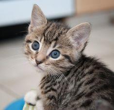 awwww - Emily! via good morning kitten