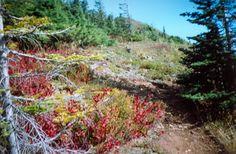 Elk Mountain and Mount Thurston