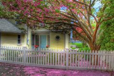 How to Survive and Thrive as a Single Person in Retirement Beautiful Gardens, Beautiful Flowers, Beautiful Places, Beautiful Pictures, Simply Beautiful, Spring Is Here, Spring Time, Hello Spring, White Picket Fence