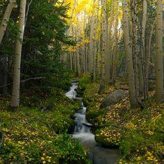 Boulder Brook Forest Estes Park, Rocky Mountain National Park, Colorado