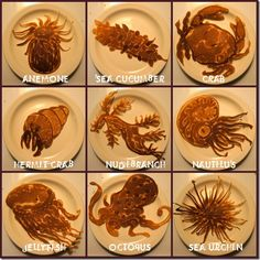 Sea pancakes, eat pancakes! Sea Pancake, Pancake Art, Pancake Maker, Breakfast And Brunch, Morning Breakfast, Sunday Morning, Breakfast Ideas, Cute Food, Good Food
