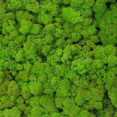 Verde Profilo MOSSdesign - Colours - WASABI #verdeprofilo #mossdesign #moss #lichen #colours #wasabi #nuance
