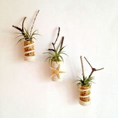 Free shipping!! set of 3 air plant cork magnets -with rope- starfish and twigs-succulent unique gift for the wine lovers. gift bag included.... $18