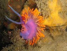 Resultado de imagen para el coral mas bello