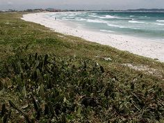Famous for its cold waters, a beach is deep and quite dangerous for their water rapids. However, the beach is good option for those who want peace of mind, because it is not very crowded as the beach of Forte and windsurfing is common. Is in 4 km of road connecting Cabo Frio to Arraial do Cabo.