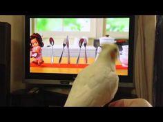 オカメインコ キューピーでノリノリ - YouTube