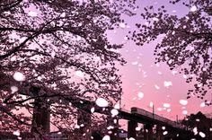 風に舞い散る桜吹雪。その風は、真っ盛りな春の衰えか、はたまた夏への入り口か。