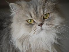 Easy To Follow Ideas About Taking Care Of Cats - http://petcarecheap.com/easy-to-follow-ideas-about-taking-care-of-cats-2/