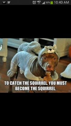 Become the squirrel!