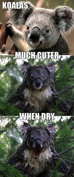 Moist Koala ≠ Moist Owlet. Haha @Katie Schmeltzer Schmeltzer S @Emily Schoenfeld Schoenfeld Mikolajewski