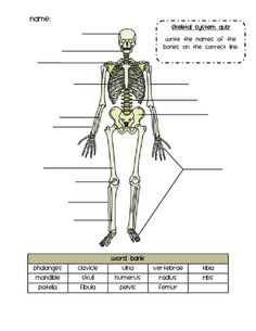 Printables Skeletal System Worksheet human skeleton worksheets and anatomy on pinterest skeletal system quiz
