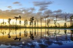 Billy's Island Sunset, Okefenokee Swamp