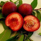 Red Raspberry Nectarine/Lovell [SPRING]