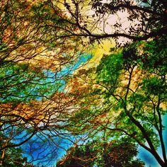 Tree&Clouds harmonizing