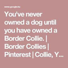 You've never owned a dog until you have owned a Border Collie. | Border Collies | Pinterest | Collie, You ve and Dog