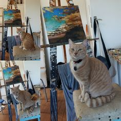 Mornings, Oil On Canvas, Studio, Cats, Painting, Animals, Instagram, Gatos, Animales