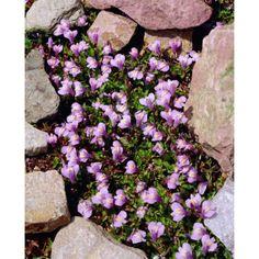 Gardening Tips, Fall Wedding, Floral Wreath, Wreaths, Outdoor Decor, Flowers, Home Decor, Gardens, Weddings