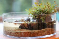 Biotope Aquarium, Aquarium Garden, Planted Aquarium, Small Water Gardens, Indoor Water Garden, Water Terrarium, Terrarium Plants, Miniature Zen Garden, Plants In Bottles