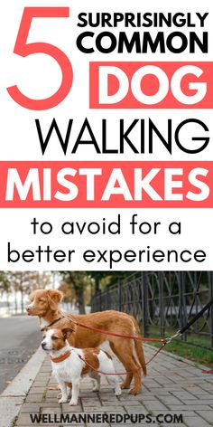 Surprisingly common dog walking mistakes to avoid for a better experience each time you walk your dog!