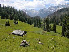 Die Regenalm im Nationalpark Berchtesgaden - Berchtesgadener Land Blog