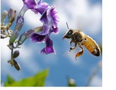 Organic Pest Control: The Best Plants to Attract Beneficial Insects (Mother Earth News) Beautiful Images, Beautiful Flowers, Beautiful Bugs, Pictures Of Insects, Bee On Flower, Shallow Depth Of Field, Mother Earth News, Beneficial Insects, Save The Bees