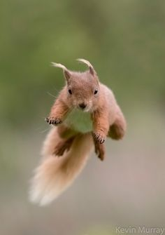 Photograph Jumping in the wind by Kevin Murray on 500px