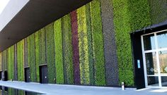 Greenroofs.com Projects - Los Cabos International Convention ...