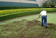 Advice for top dressing a lawn--a great idea for leveling and fertilizing your lawn.