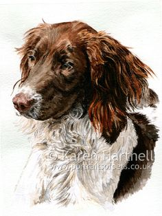 english springer spaniels artwork photography - Google Search