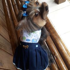 Pet Clothes, Animal Design, Yorkie, Cute Puppies, Fashion, Dog Dresses, Dressed Up Dogs, Maxi Dresses, Labrador Puppies
