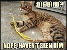 BIg BIrd Nope haven't seen him