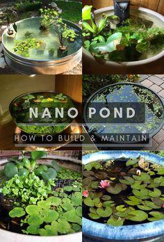 Indoor Pond, Indoor Water Garden, Indoor Plants, Terrarium Plants, Garden Plants, House Plants, Fish Tank Terrarium, Fish Pond Gardens, Container Water Gardens