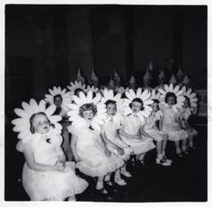 daisy heads.