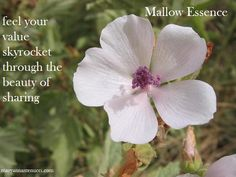 We love the feeling of sharing our brilliance with open and warm hearts. Mallow essence helps us to receive and to reach out to others. As a result, we feel our value skyrocket through the beauty of sharing.