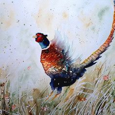 'Pheasant watercolor' by Marko Ivancevic Watercolor Bird, Watercolour Painting, Pheasant, Bird Art, Art Prints, The Originals, Artist, Pictures, Instagram
