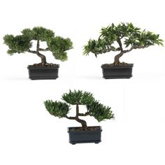 "12"" Bonsai 570 Collection (Set of 3)  http://decoratetoday.athome.com/83004121-12-bonsai-570-collection-(set-of-3).html"