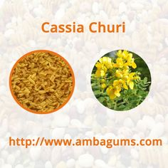 Tentative nutritious value in #CassiaChuri -	More than 9% crude fibre -	More than 28% fat -	More than 5% moisture