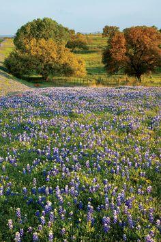 The South's Best Girlfriend Getaways: Bluebonnet Field in Fredericksburg, TX