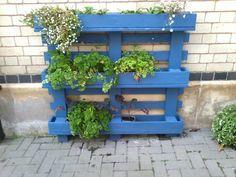 wooden blue painted pallet planter