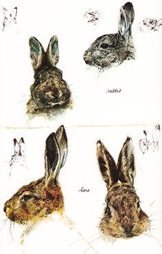 rabbit hare