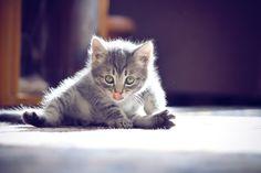 """""""Cat"""" by Ann Kibukevich, via 500px."""