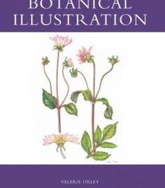 Botanical Illustration PDF